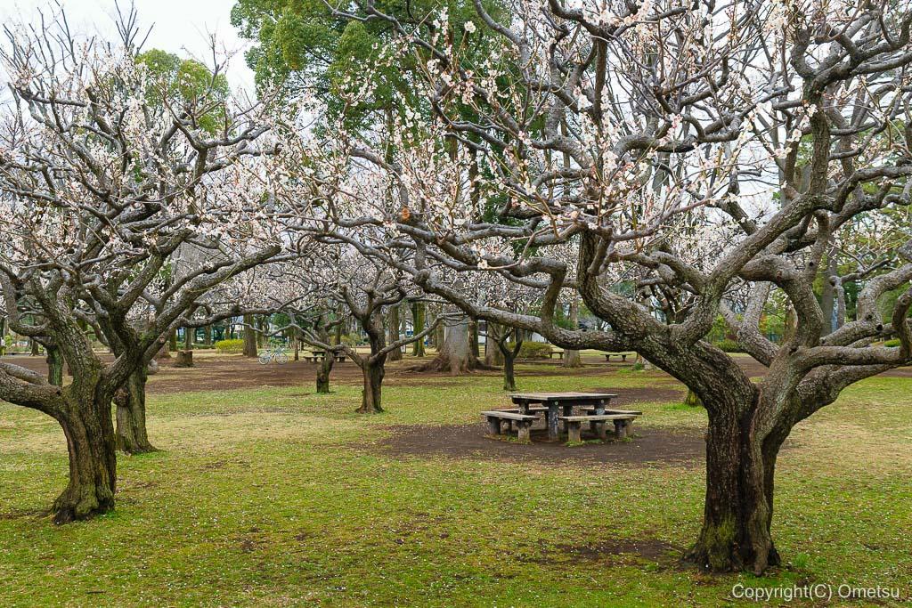 青梅市・わかぐさ公園の、梅
