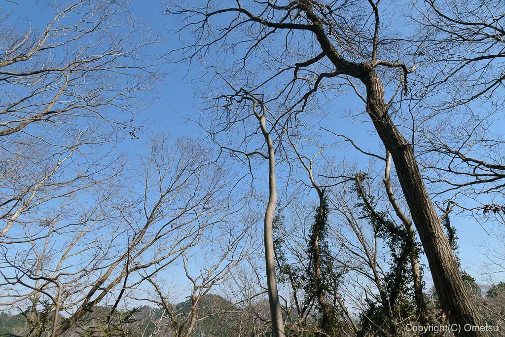 あきる野市郊外の、小峰公園の木