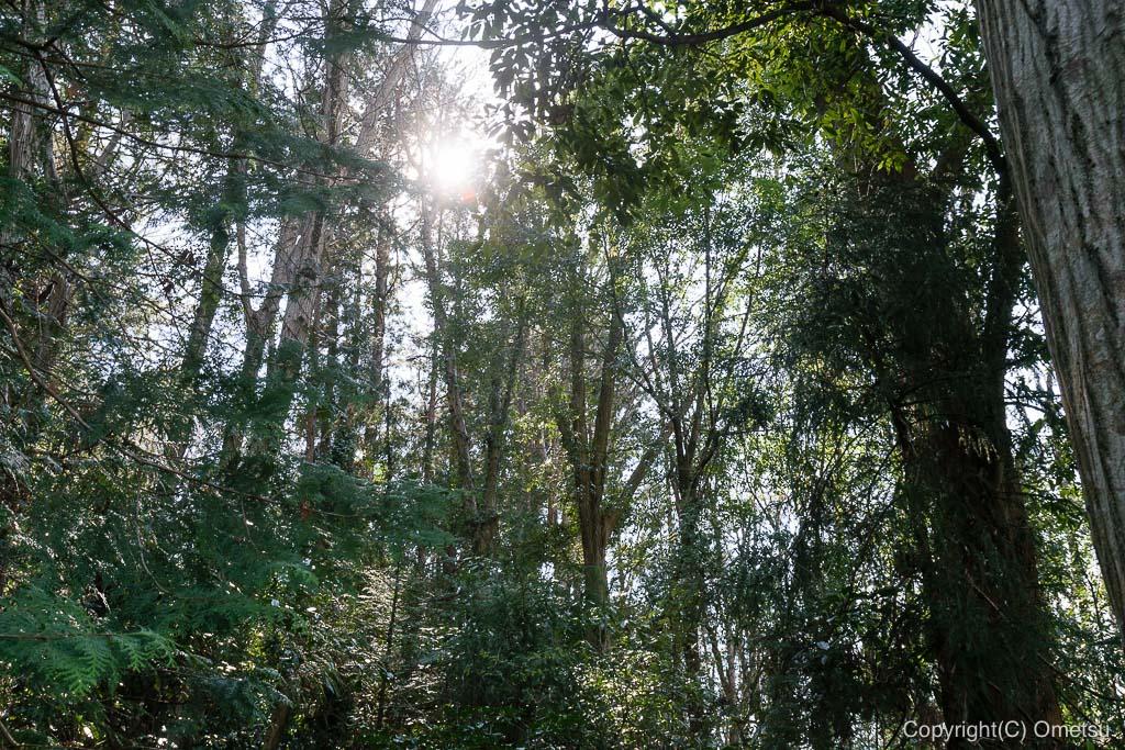 あきる野市・切欠の、森