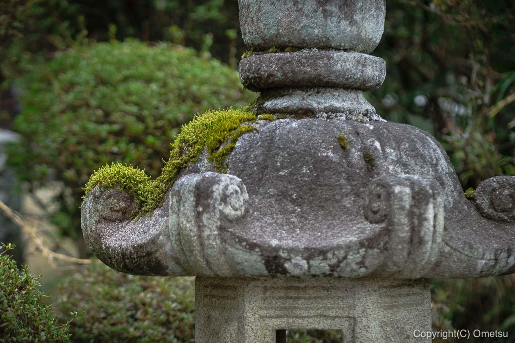 青梅・梅岩寺の苔