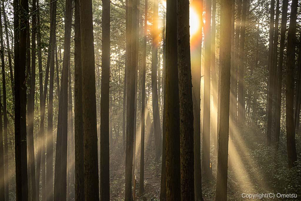 日の出山・登山道の、森の光芒