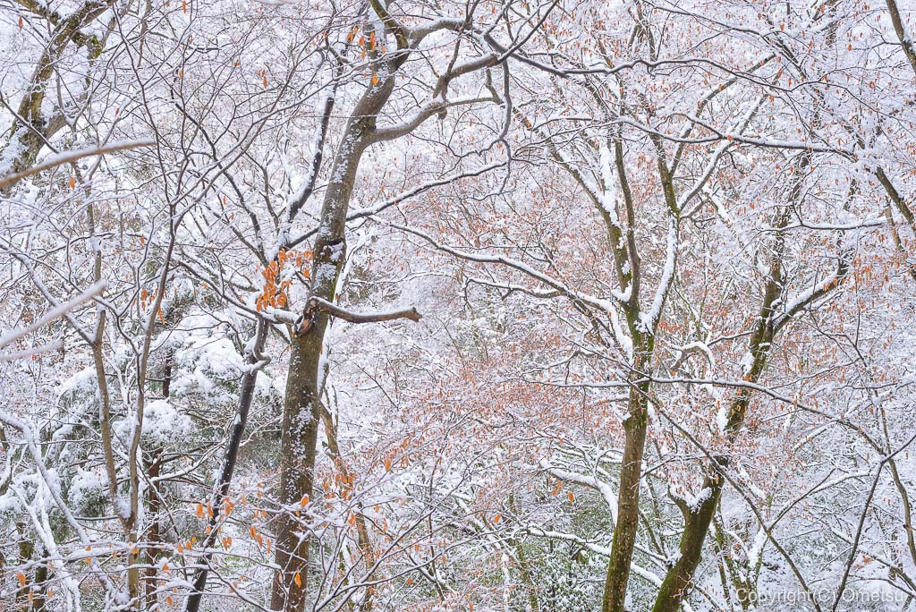 青梅市・御岳山、雪の森