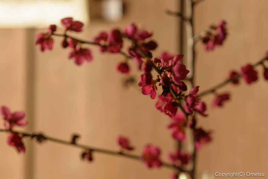 あきる野市・五日市の、小机邸・喫茶室 安居の、店内の花
