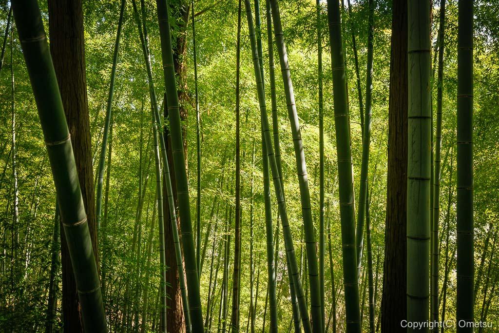 あきる野市・大悲願寺の、竹林