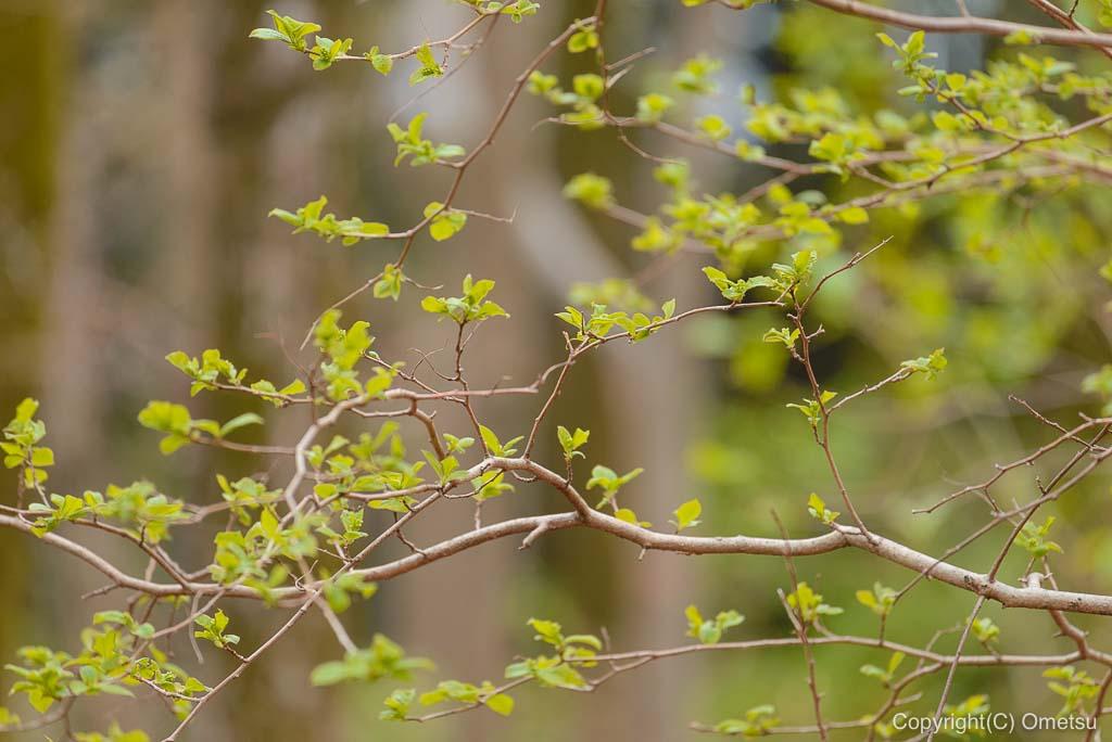 釜の淵公園の新緑