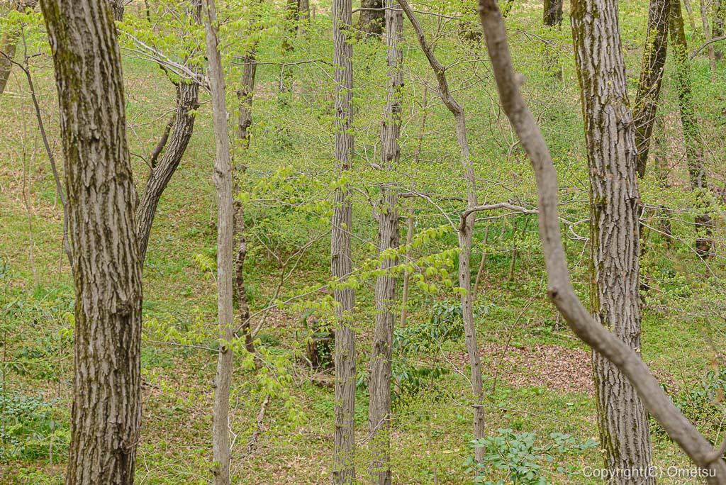 釜の淵公園の雑木林