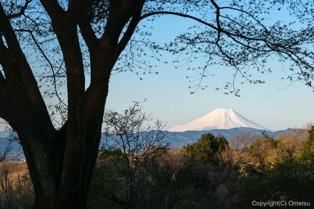 六道山公園・出会いの辻付近からの、富士山