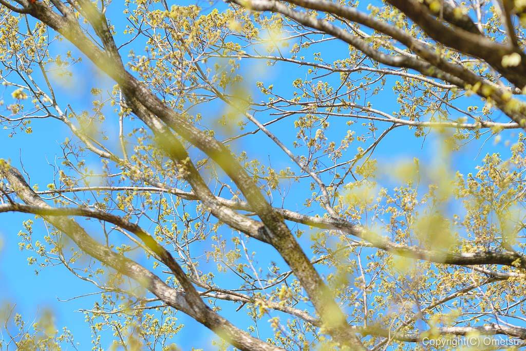 六道山公園の新緑