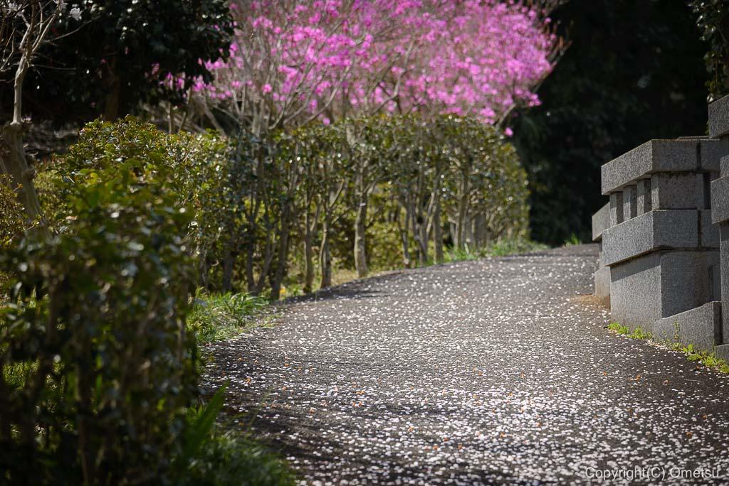 宗泉寺の小路