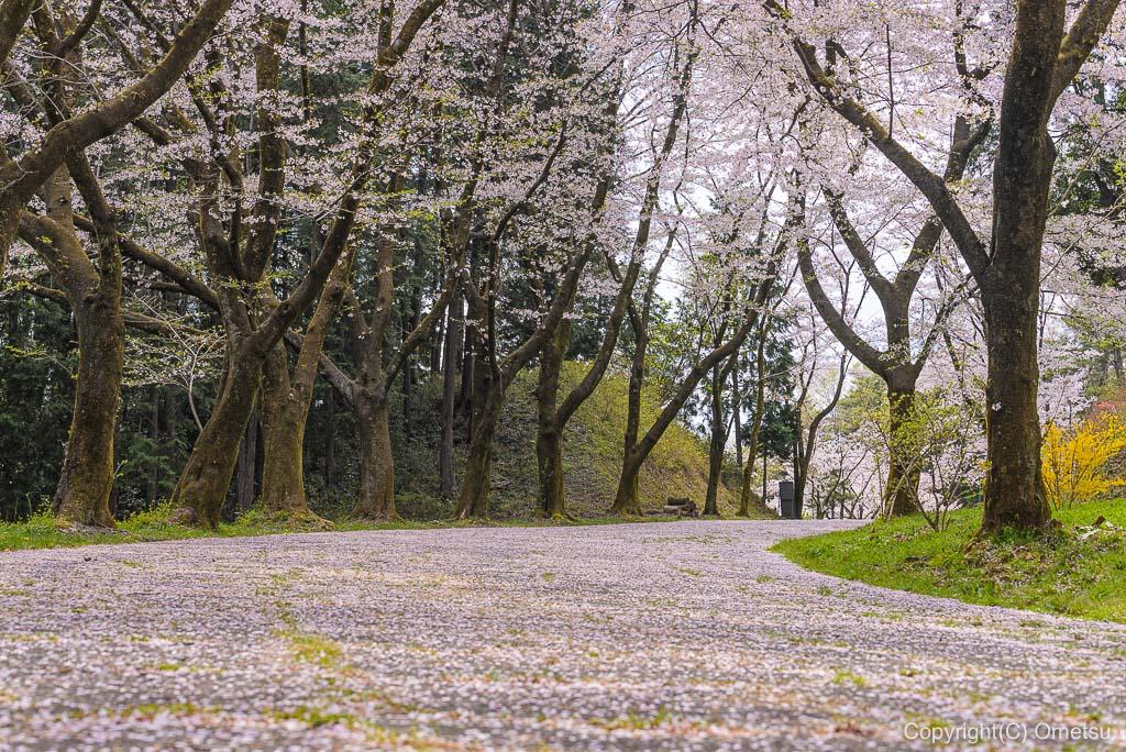青梅・霞丘陵の桜並木