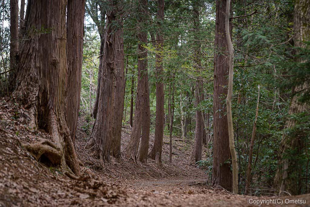 青梅・七国峠の森