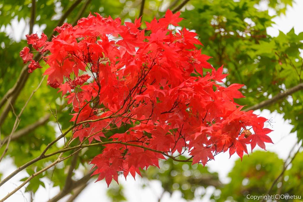 御嶽駅の、春の紅葉