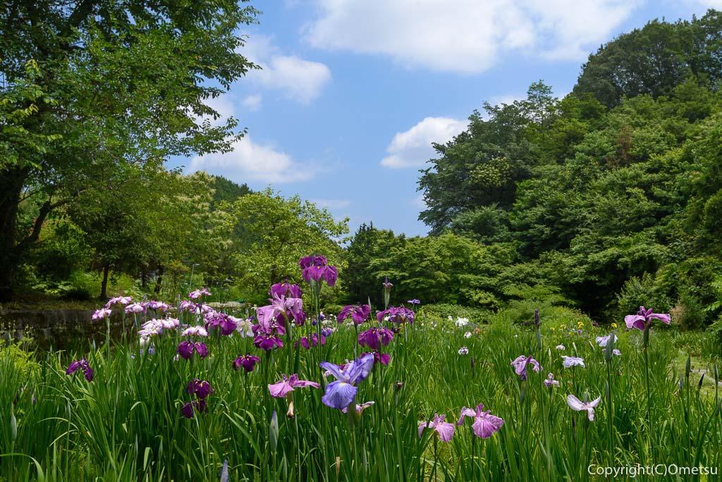 杣保花しょうぶ園