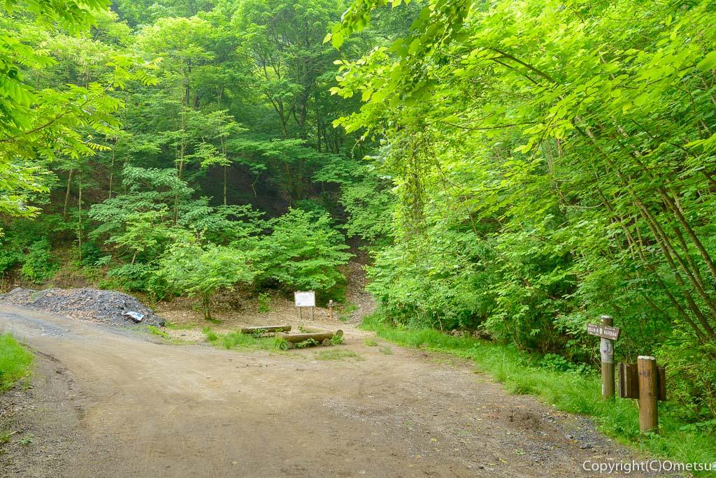 棒ノ折山、白谷沢コースの林道