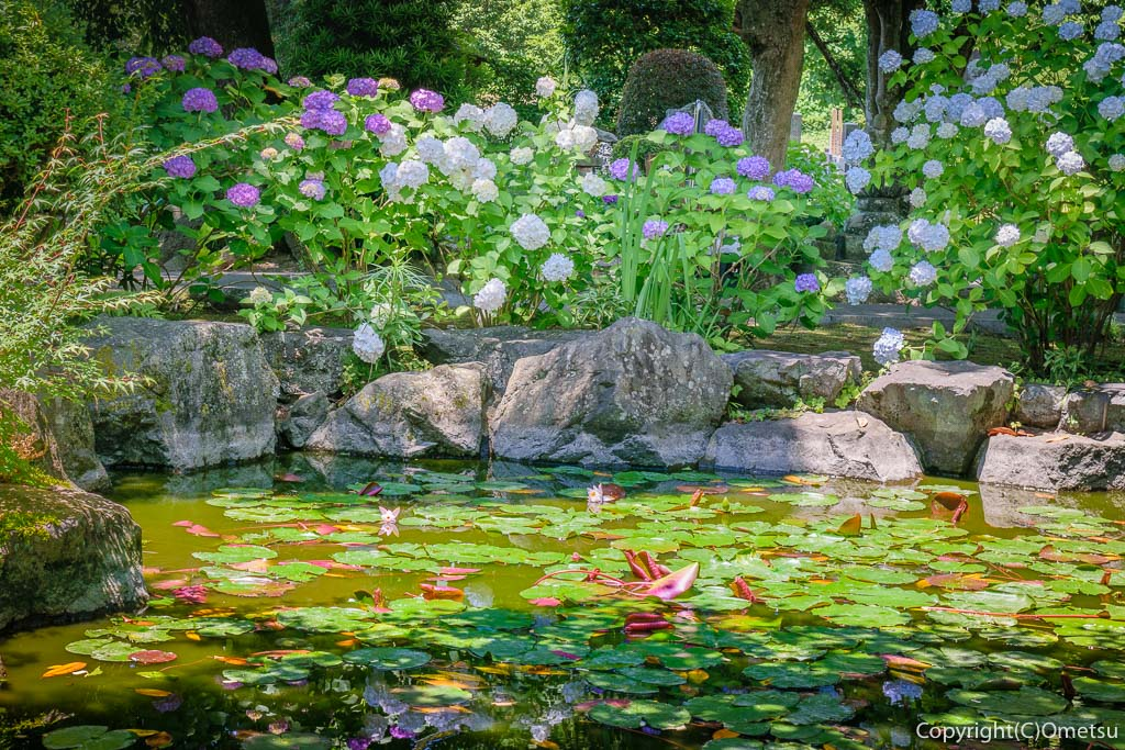 あきる野・地蔵院の池