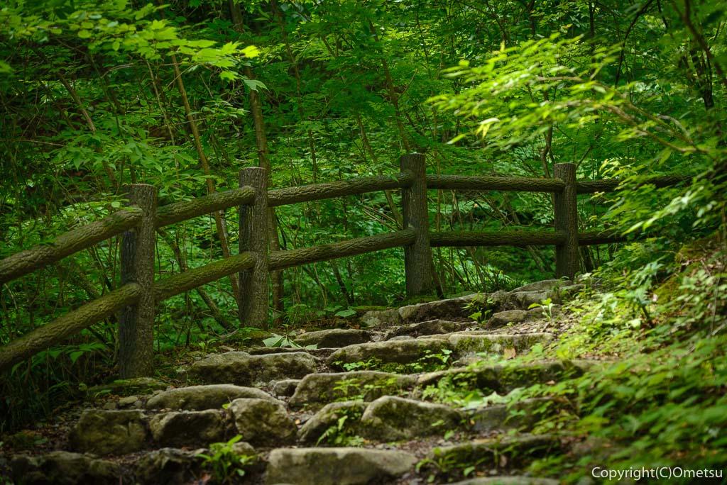 檜原村・三頭山の、登山道