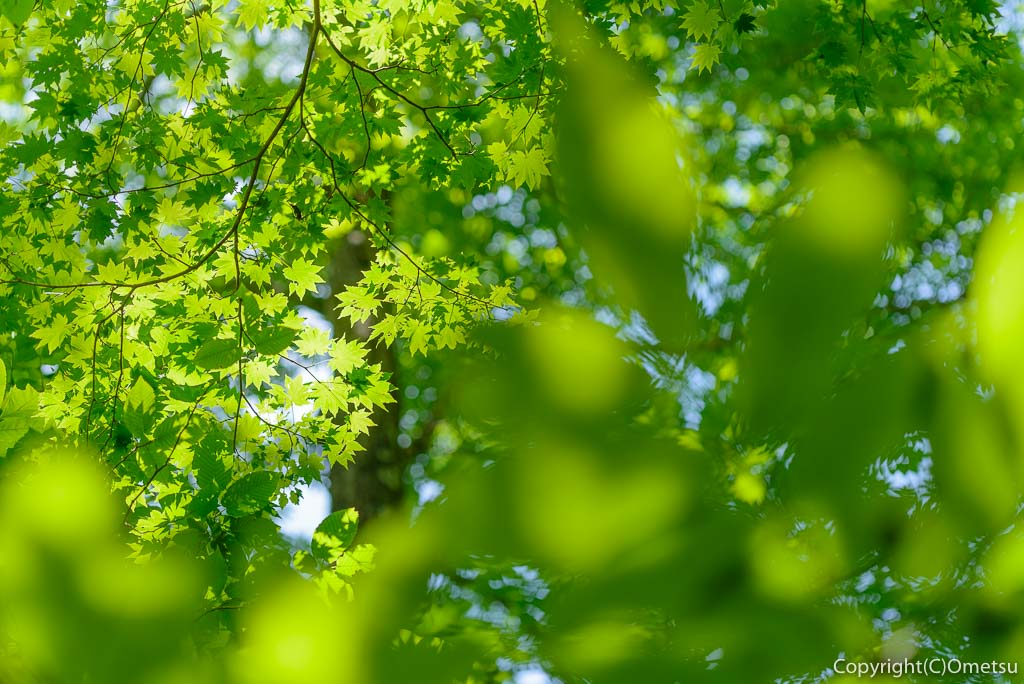 檜原村・三頭山の、緑
