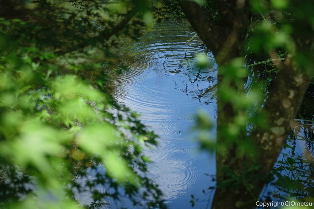 青梅市・黒沢の聞修院の池