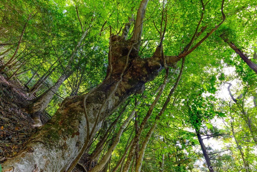 奥多摩むかし道の森