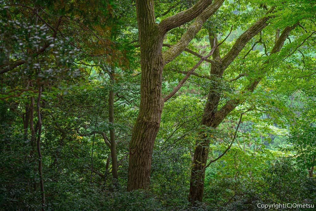 高水三山・表参道の森