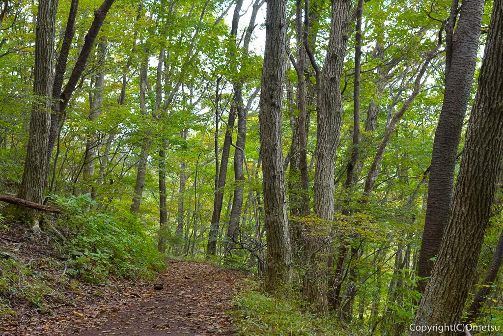 高水三山の雑木林