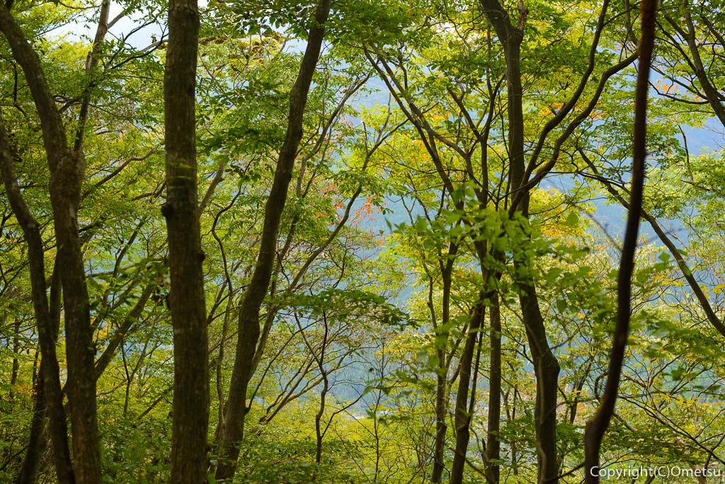 高水三山・縦走路の林