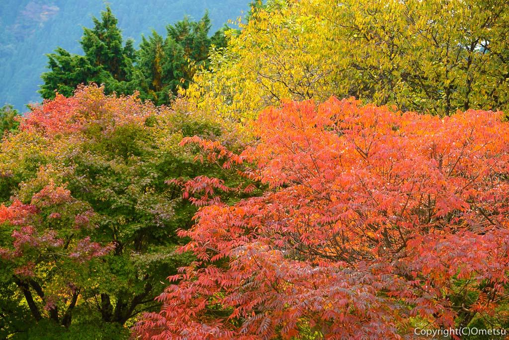 御岳山の紅葉
