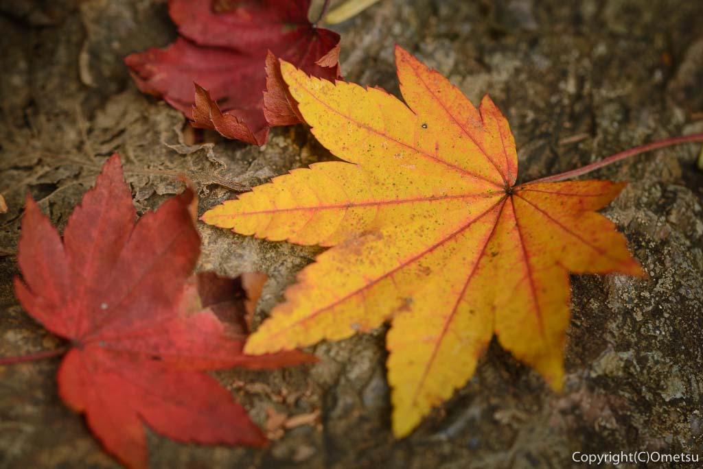 御岳山・奥の院の紅葉