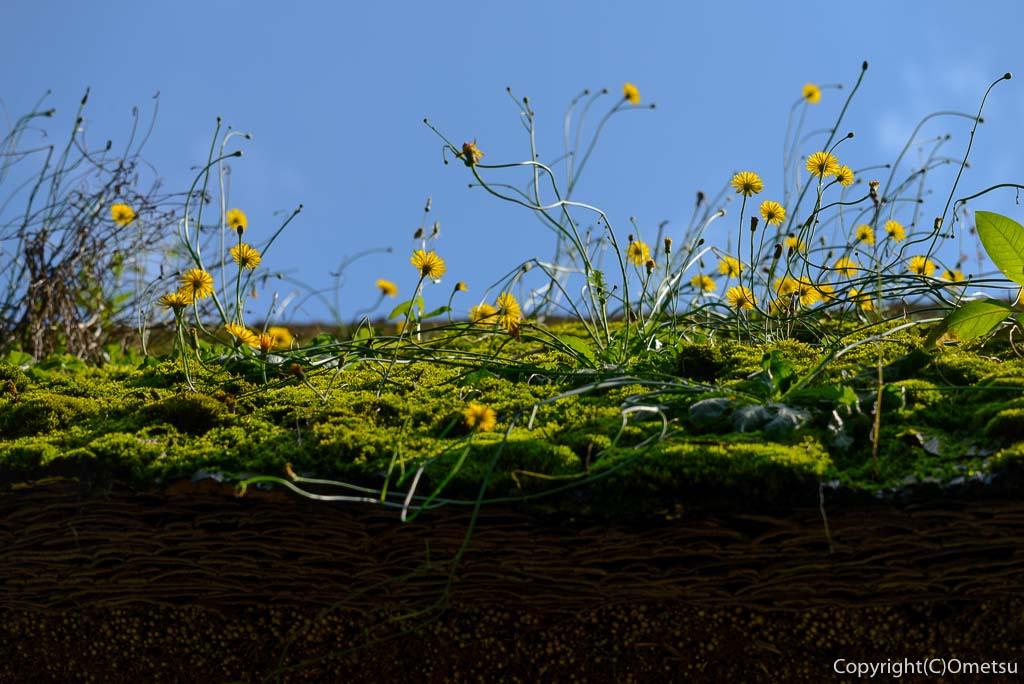 あきる野市、広徳寺・本堂の屋根の花