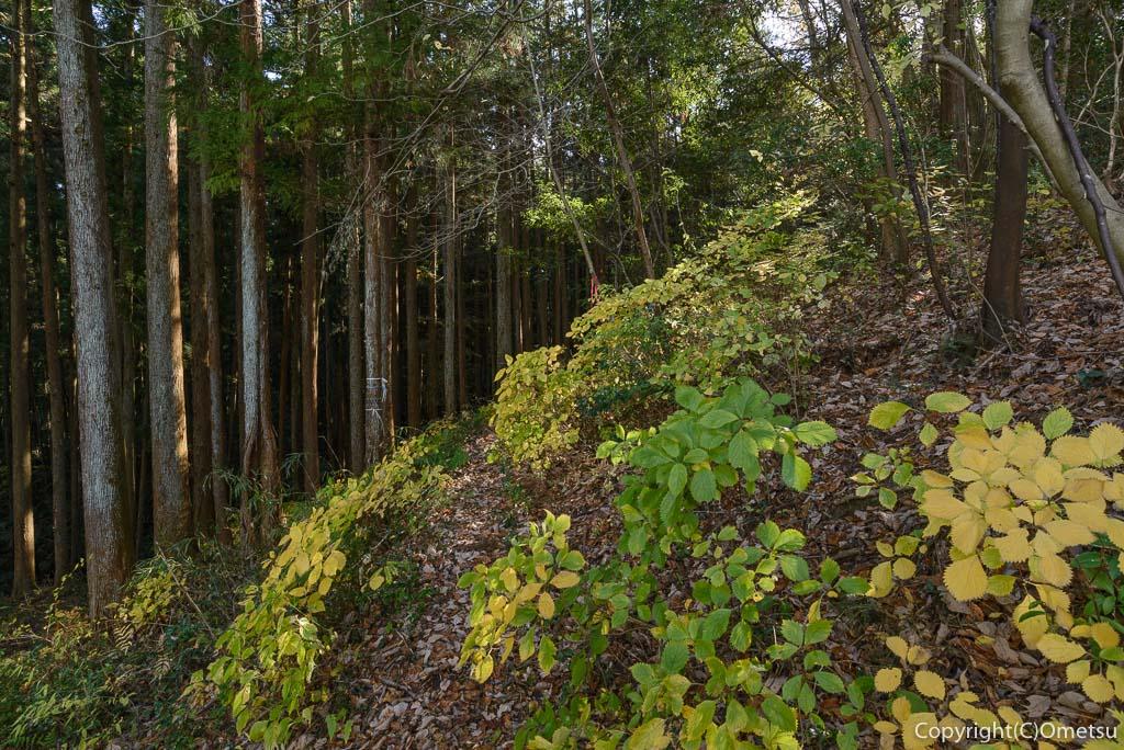 青梅中央アルプス・裏銀座の成木登山道