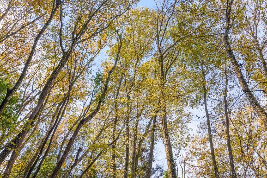 青梅中央アルプス・裏銀座の成木登山道の雑木林