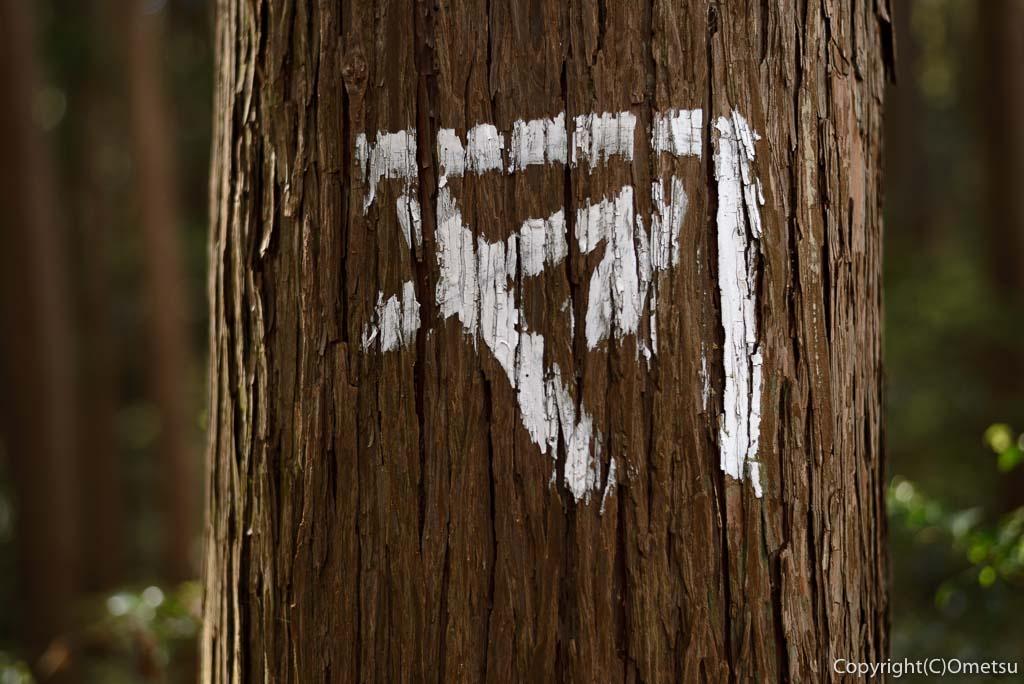 青梅中央アルプス・裏銀座の木「カネヤ」