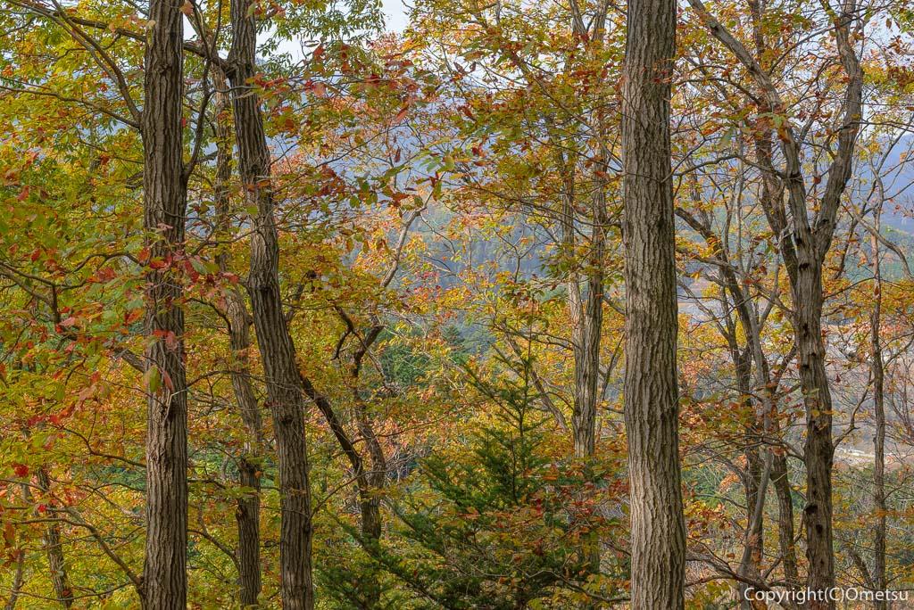 青梅中央アルプス・裏銀座の345m峰の雑木林