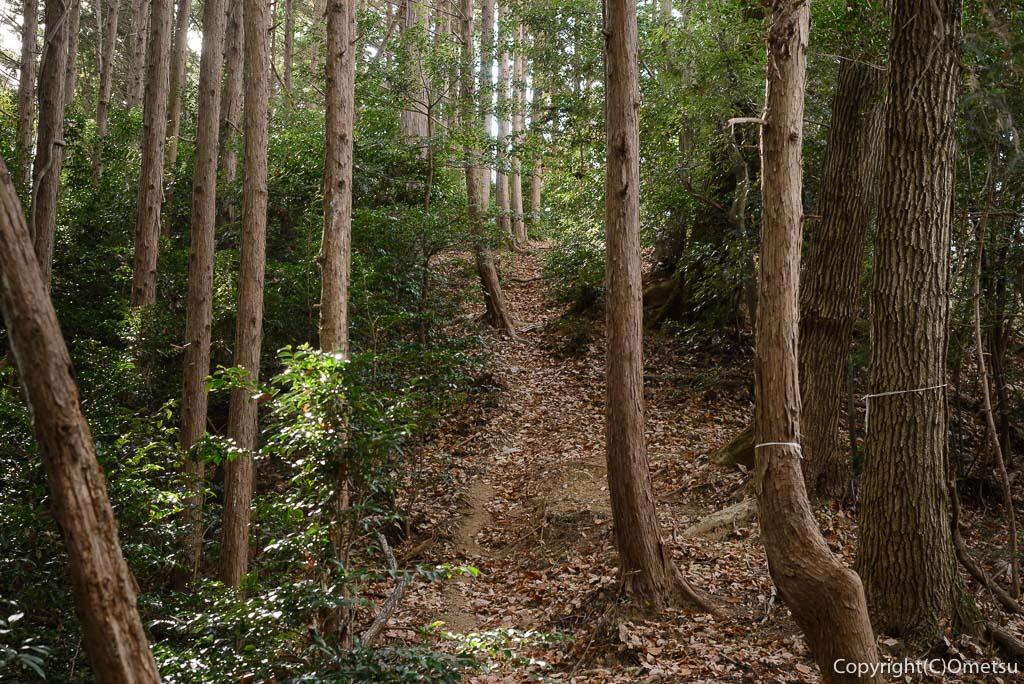 青梅中央アルプス・裏銀座の登山道