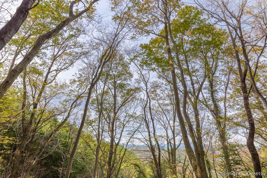 青梅中央アルプス・裏銀座の雑木林