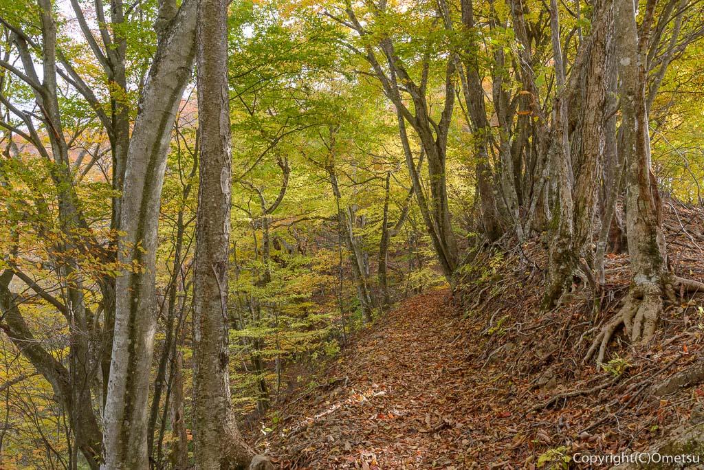 鶴峠から三頭山の広葉樹林