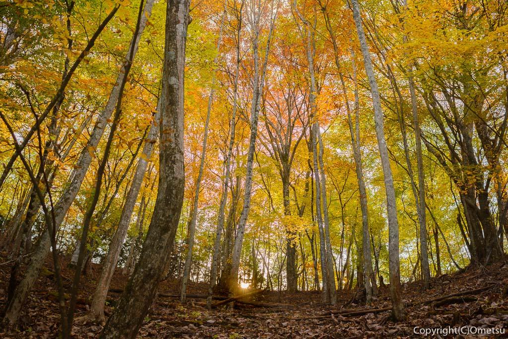 鶴峠〜三頭山の登山道の森