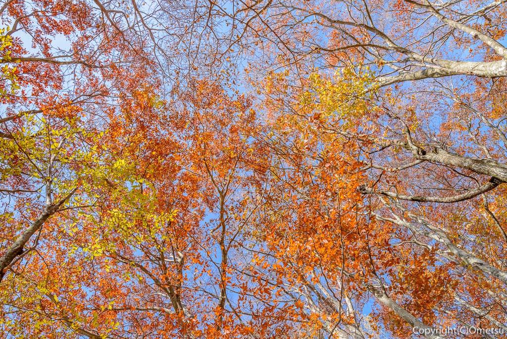 三頭山の木々