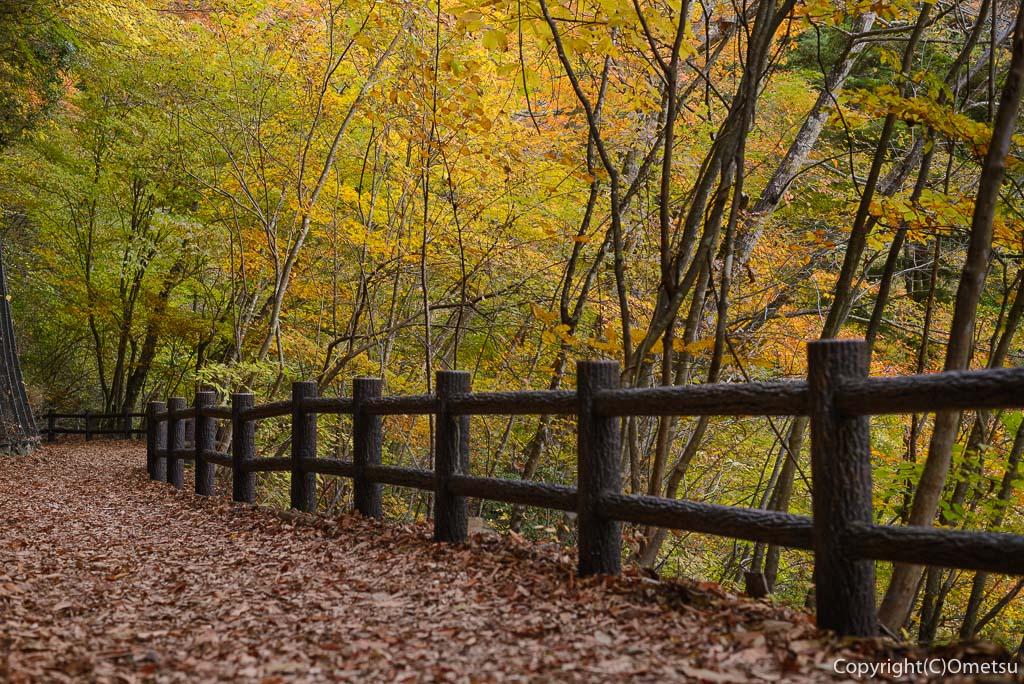 都民の森の遊歩道