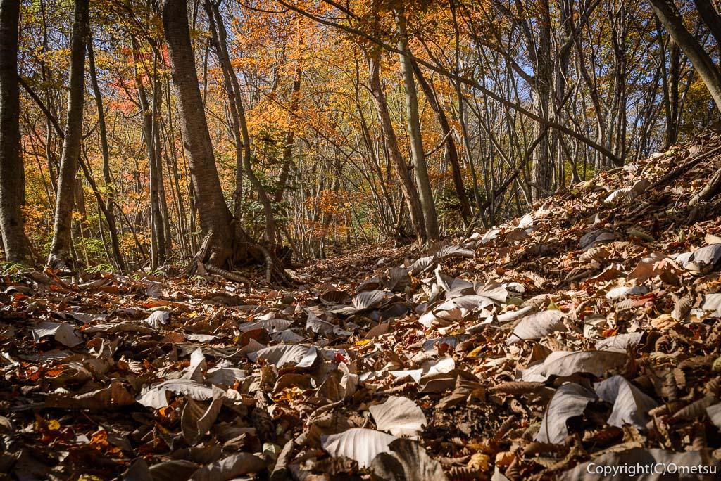 槇寄山登山道の、雑木林の落ち葉