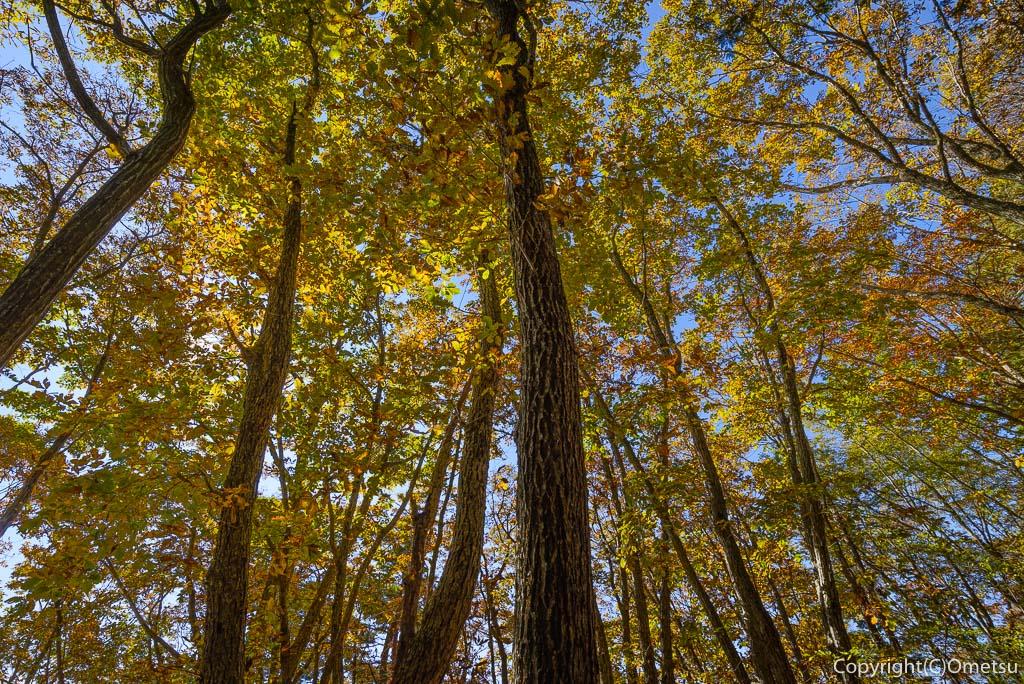 槇寄山の雑木林