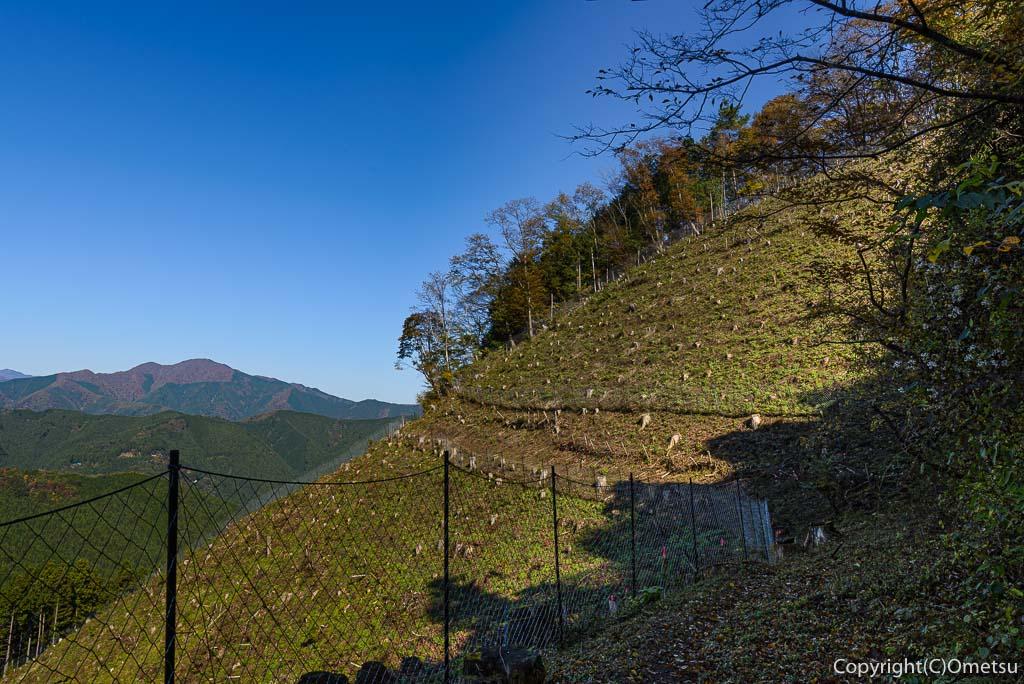 笛吹峠から、笛吹集落への道の、植林地