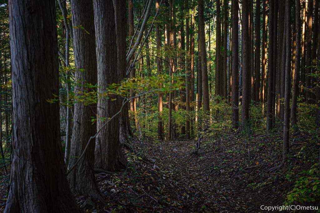 笛吹峠登山道の杉林