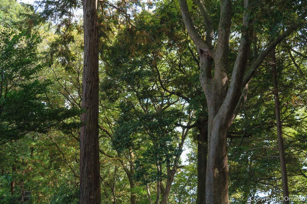 青梅市・乗願寺裏の林