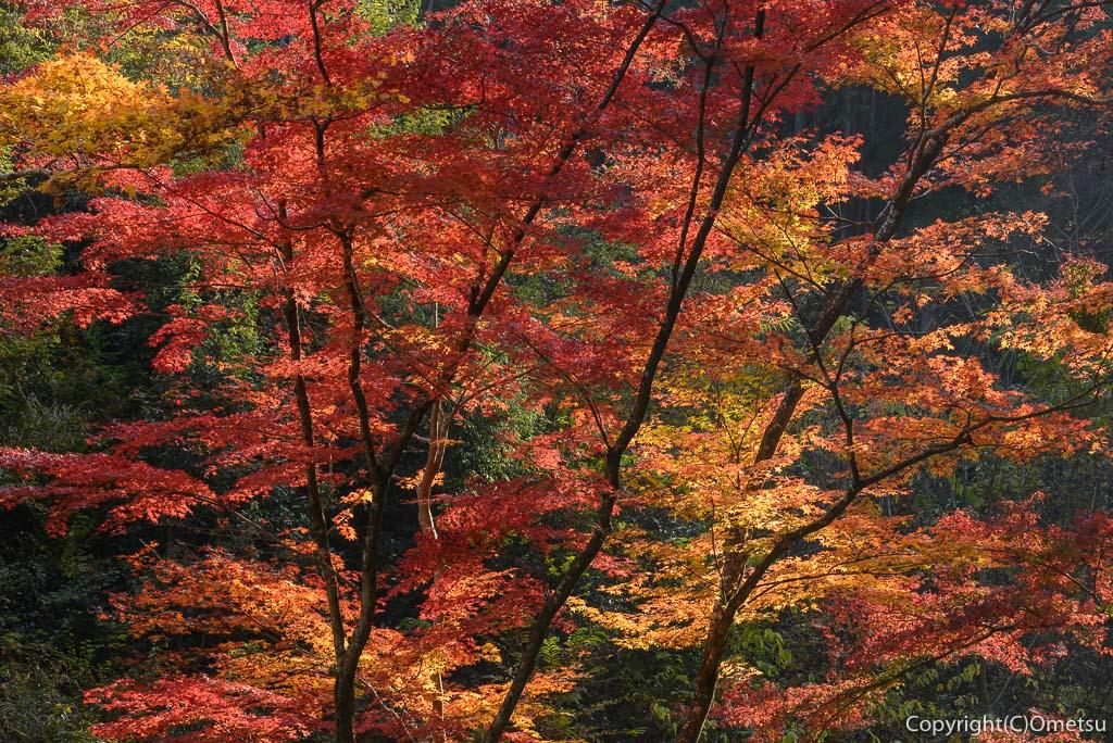 あきる野市・広徳寺の本堂裏の紅葉