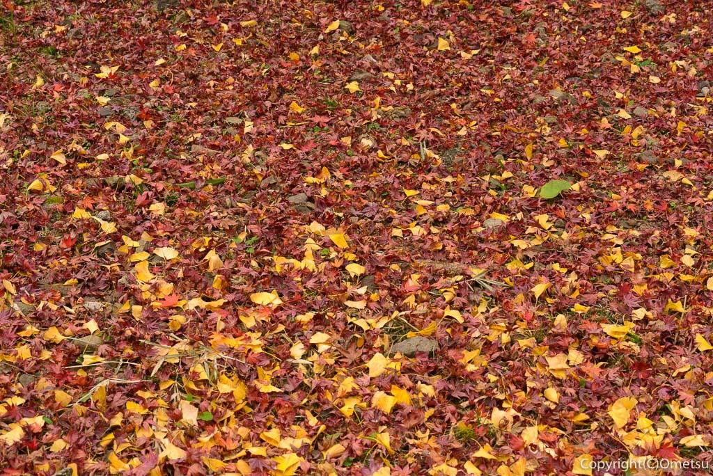 青梅市の、ブリヂストン奥多摩園の落ち葉