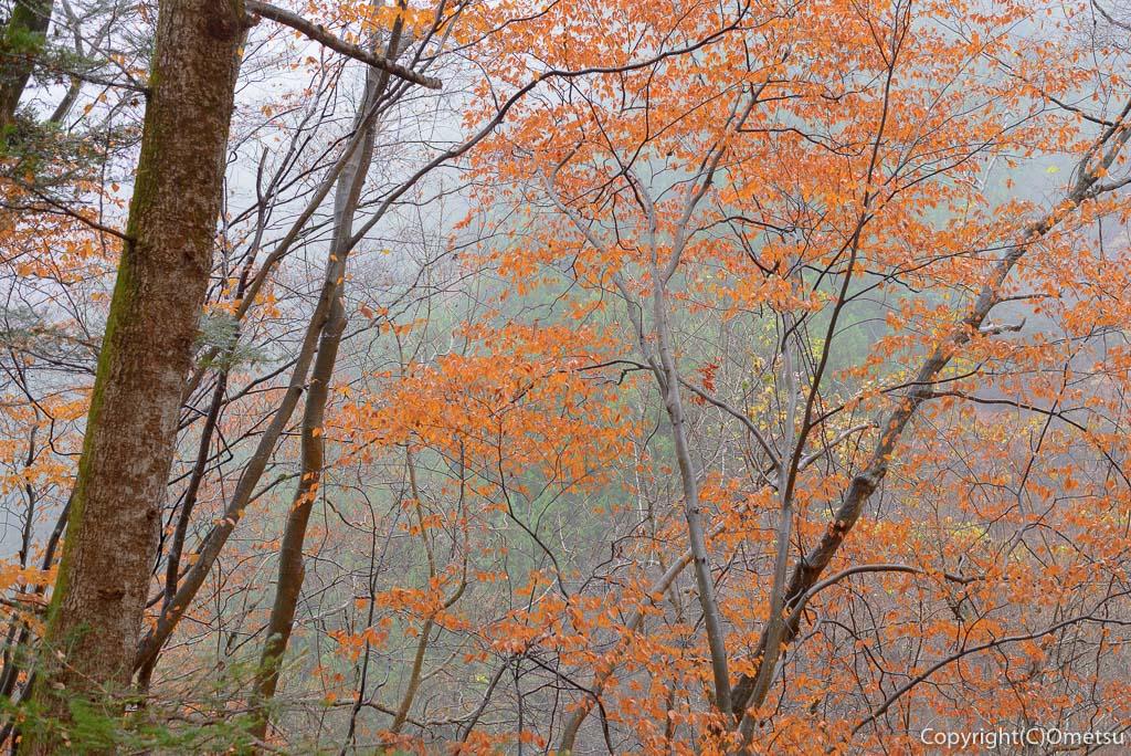 海沢渓谷の紅葉