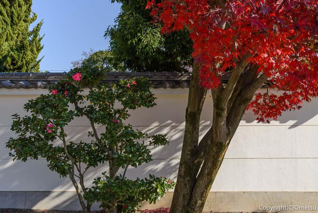 瑞穂町・円福寺の紅葉