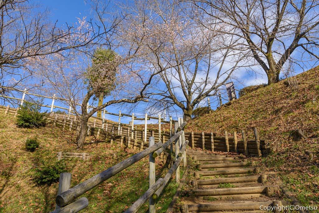 青梅市、永山公園の桜見本園