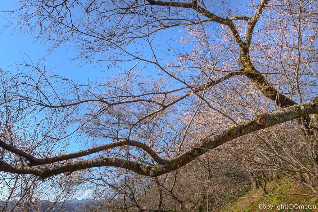 青梅市、永山公園の桜見本園と、奥多摩の山
